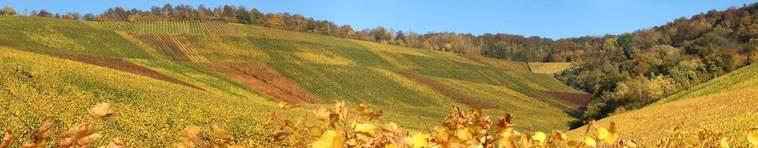 Banner Weinregion Württemberg
