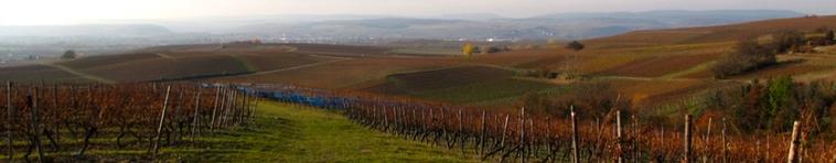 Banner Weinbaugebiet Rheinhessen
